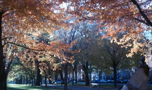 Trees with brilliantly colored leaves provide canopy on Commonwealth Avenue
