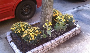 Yellow mums with sunflowers around a maple tree trunk