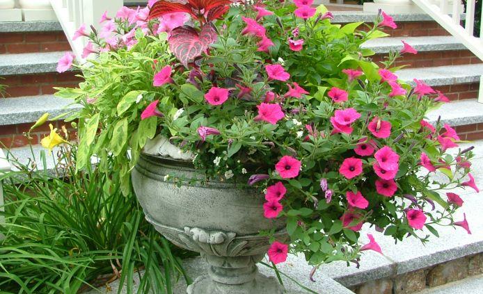 Boston Flower Show Coming in March City Garden Ideas