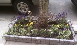 Yellow and purple blotch pansies, purple salvia, hellebore, ivy and African daisies surrounding a tree