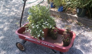 Russell's Garden Center Red Wagon with Flowers in it