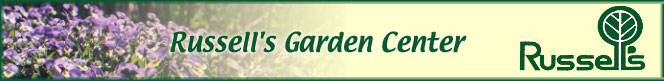 Rx For My Tree Pit Garden City Garden Ideas
