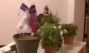 Empty blue pot, soil, ivy, snapdragon and dianthus