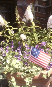 American Flag in terra cotta container with white butterfly bush, lavender silverbells and variegated vinca vine