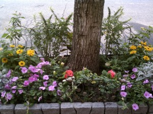 Janine's Street Side Tree Garden - Impatiens, Black Eyed Susans, Lantana, Dahlias, Silverdust and more!