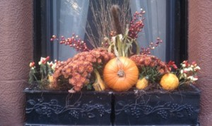 Autumn window box with mums and pumpkins