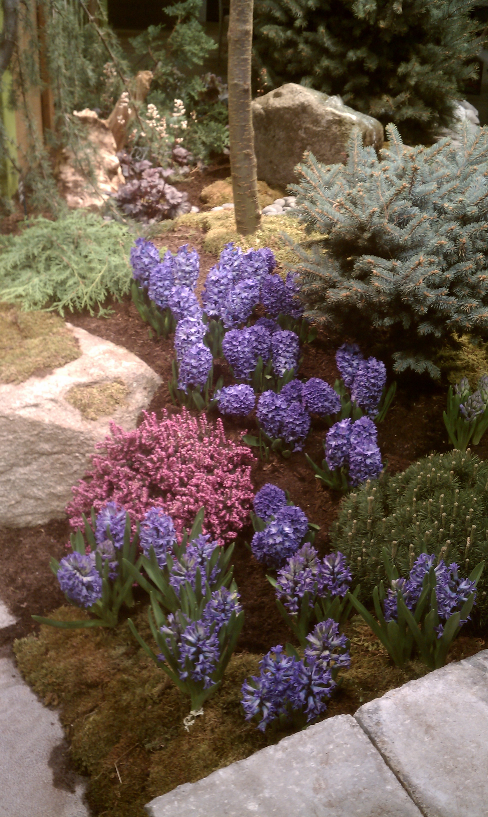 Boston Flower Show Colorful Aromatic Surprising City Garden Ideas