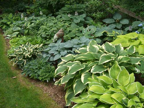 Hostas City Garden Ideas