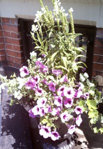 Container with Purple Petunias