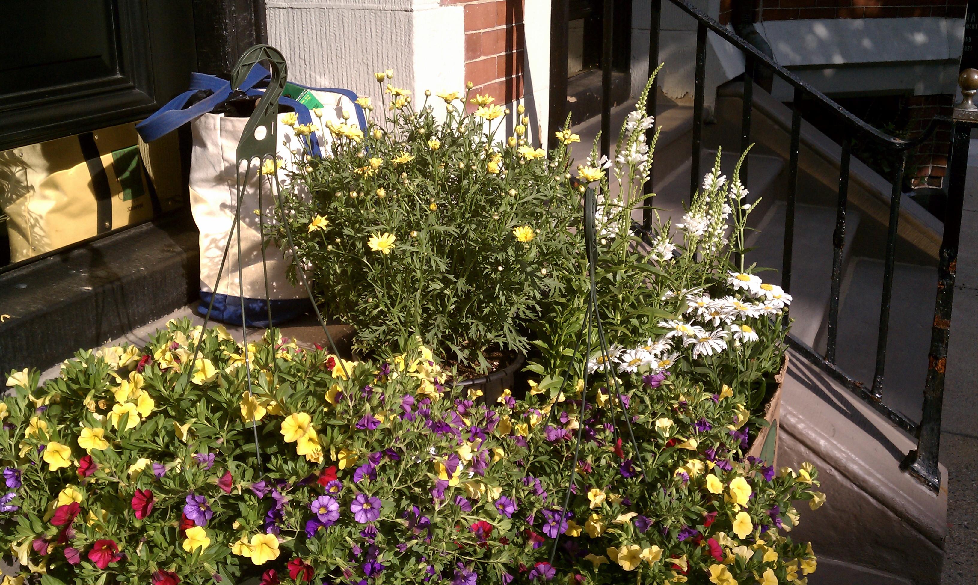 City gardening | City Garden Ideas