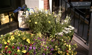 Daisies, petunias and garden supplies on the stoop