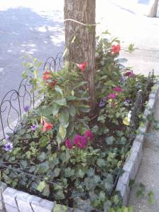 Street-side Tree Garden with mandevillas, dahlias and petunias