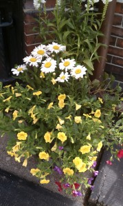 Container Garden with Yellow Petunias