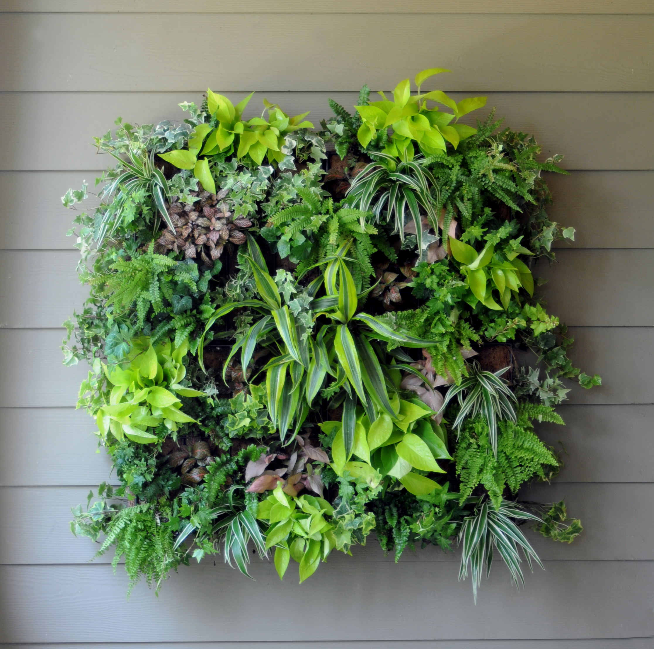 Vertical gardens city garden ideas for Vertical garden designs