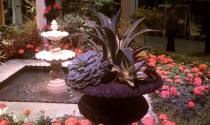 Fountain and Urn of Succulents